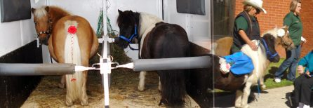 Miniature Helping Hooves Program