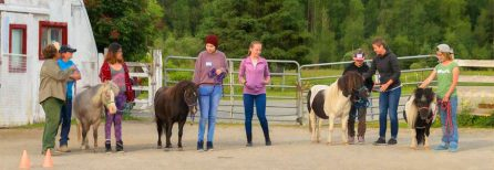 "Miniature Horse Program – ""Lead & Learn"""